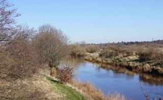 Bester Forellenfluss in Dänemark